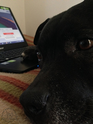 Closeup of A Brown Dog With Laptop Computer in the Background