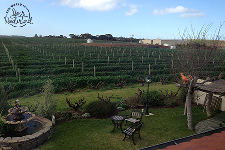 View Over Barossa Vineyard